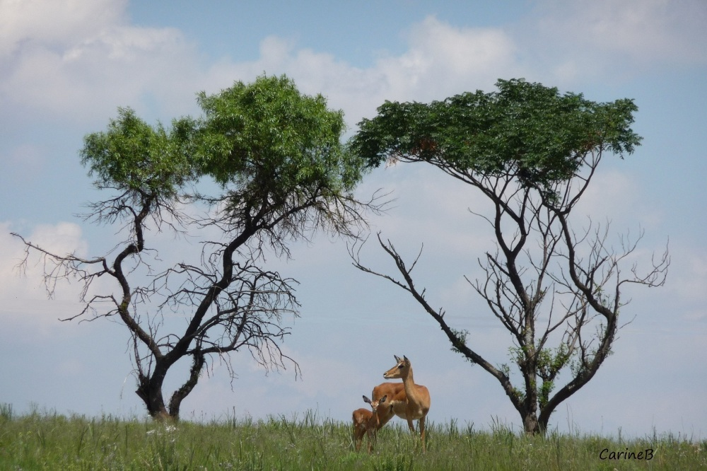 Lion's Park Joburg South Africa