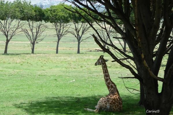 Lion's Park Joburg South Africa 8