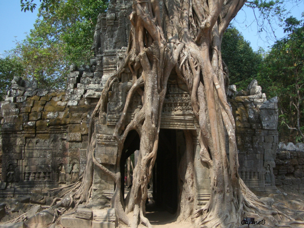 Angkor Siem Reap Cambodia 2