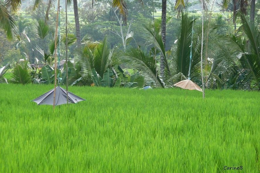 Bali Indonesia Asia  3