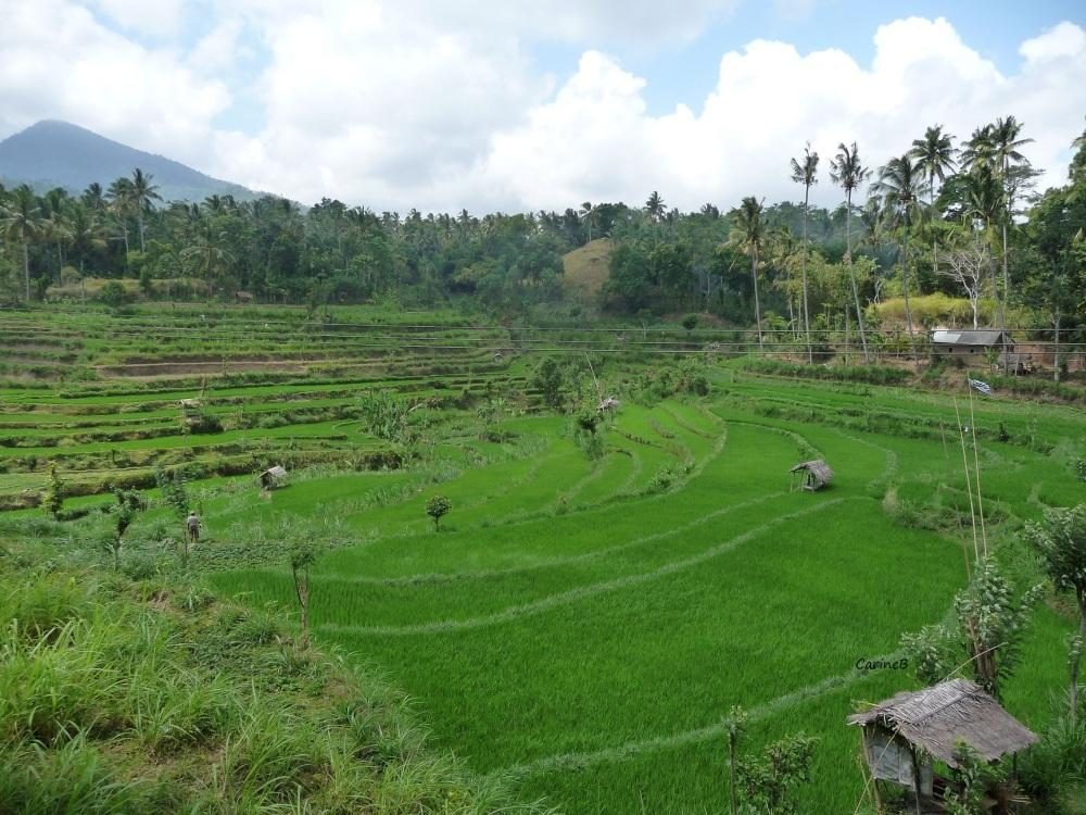 Bali Indonesia Asia  7