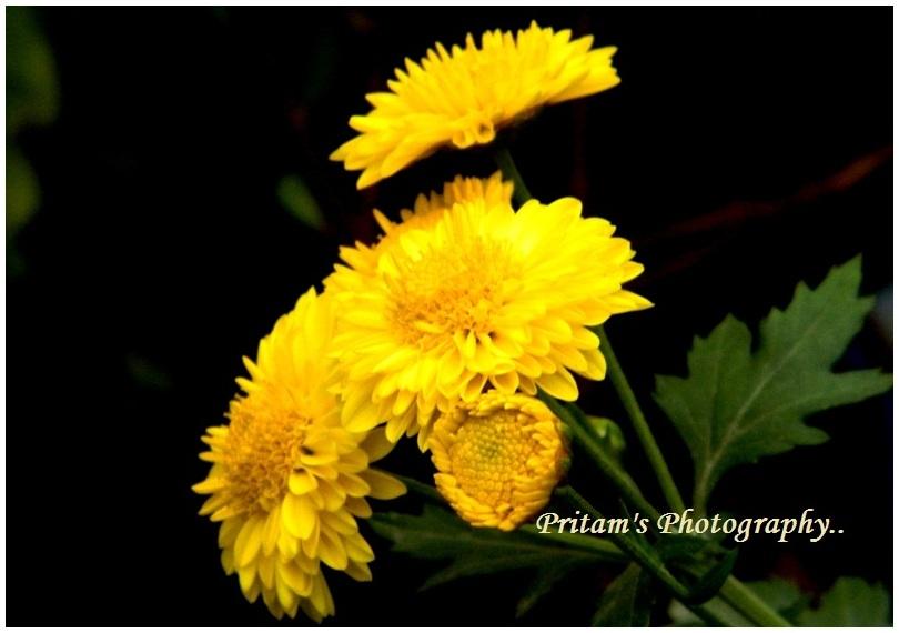 Blooming flower..!!