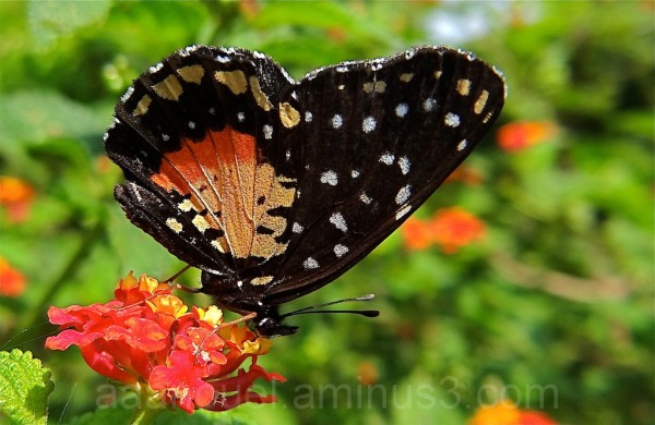 Colorful Butterfly Costa Rica macro by aaanouel