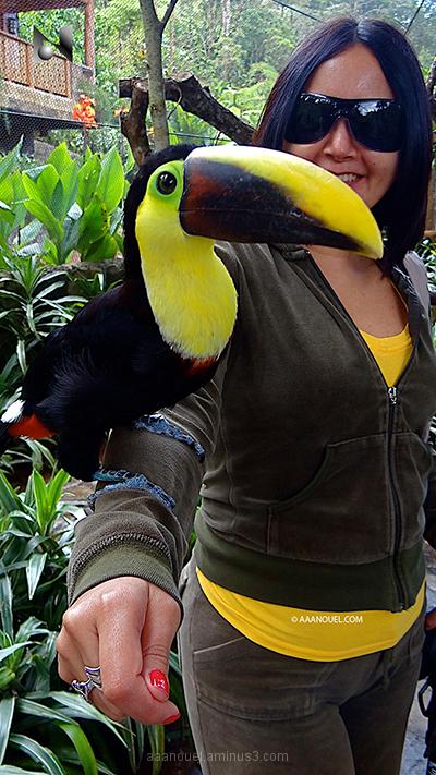 toucan tucan bird costa rica morèe aaanouel