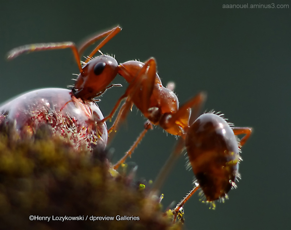 Henry Lozykowski macro bug insect ant dpreview.com