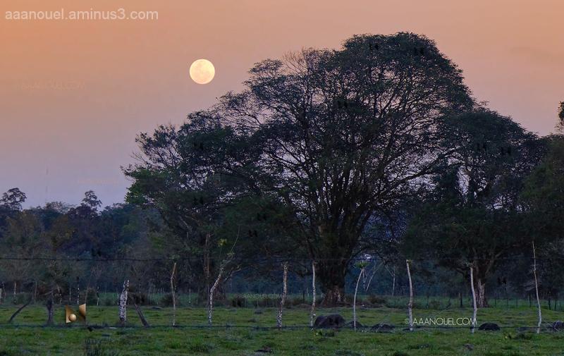"full moon rise aaanouel costa rica "" zorro ranch"""