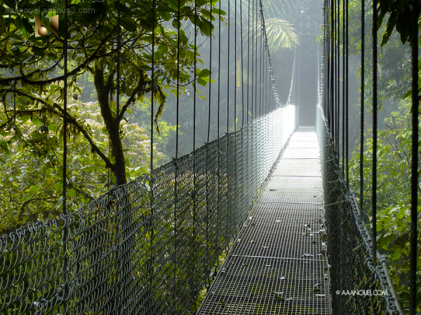 fortuna hanging bridge arenal rain forest aaanouel