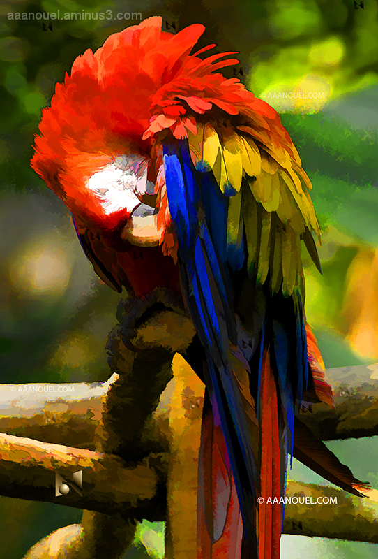 aaanouel guacamaya parrot colorful costa rica