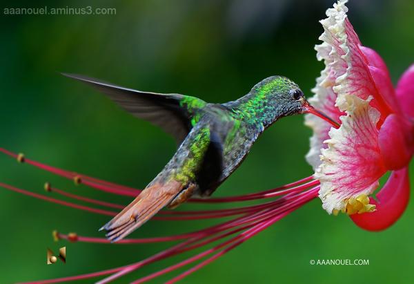 hummingbirg costa rica eligreg wife aaanouel.com