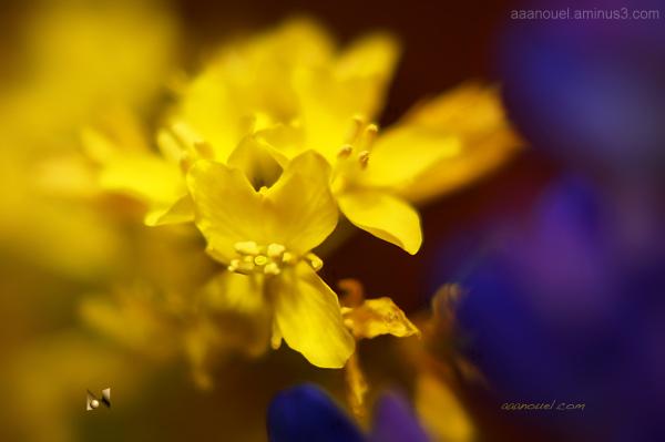 Tiny yellow