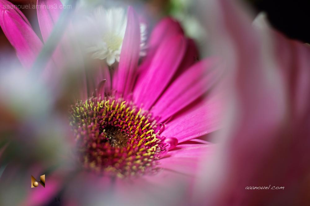 flowers macro aaanouel marumi330 3667252-800900961
