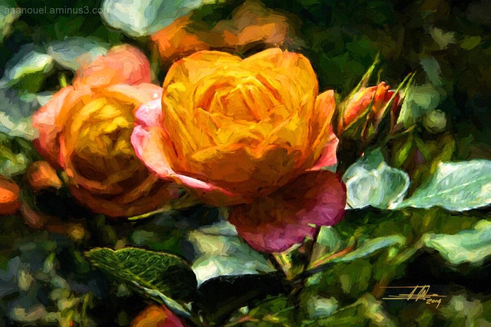 orange rose aaanouel impressionism rosa naranja