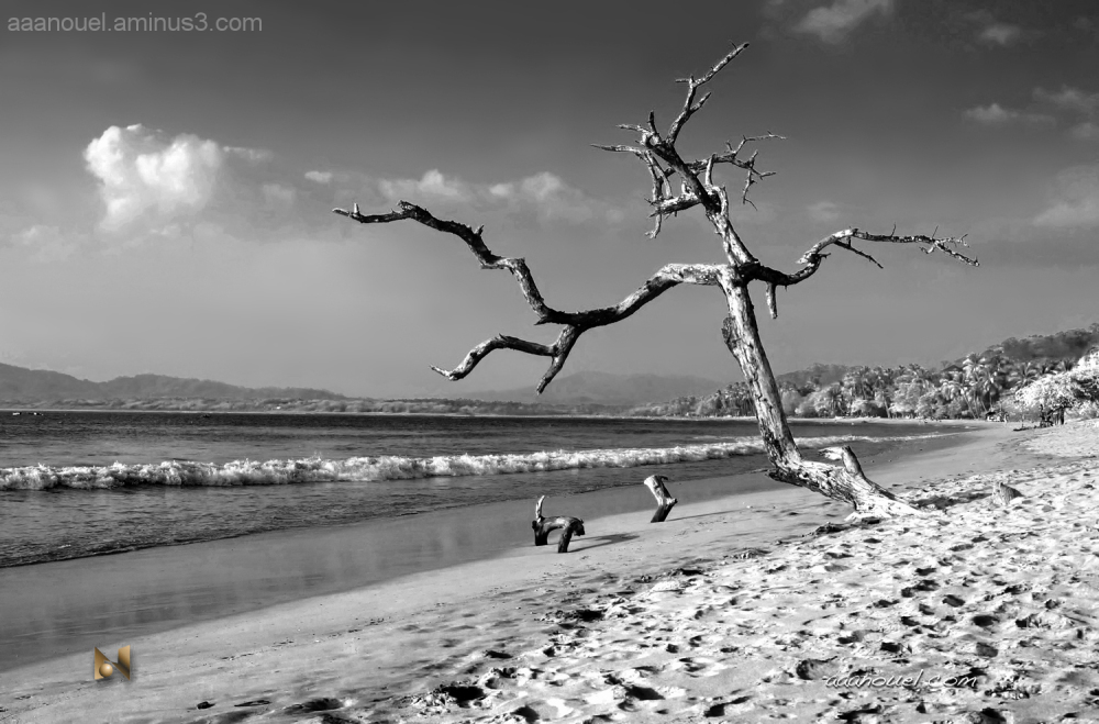 tamarindo beach playa B&W tree aaanouel costa rica