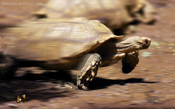 running earth turtle aaanouel