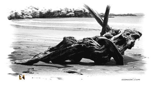 dead trunk beach sand aaanouel tamarindo Costa Ric