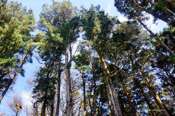 pine tree forest El Tirol Hotel aaanouel C.R.