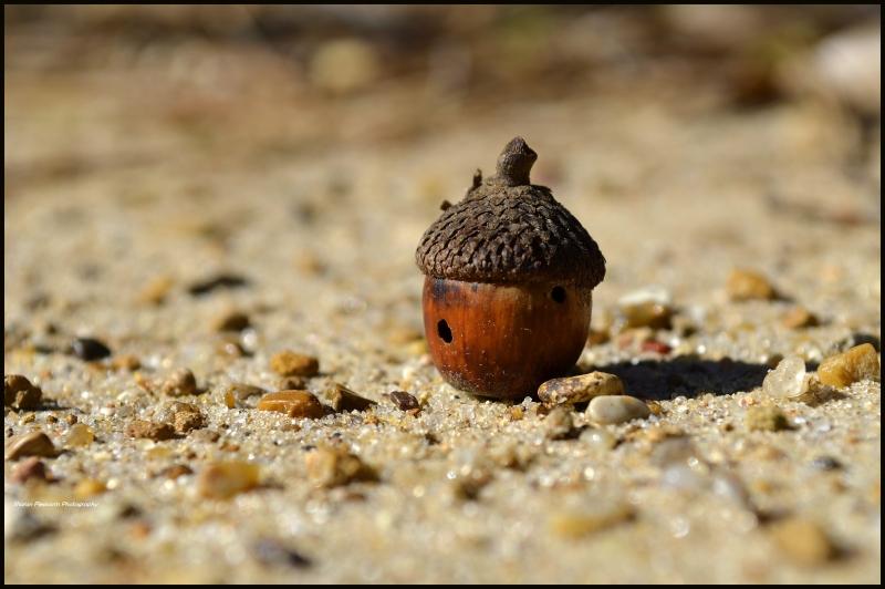 Miniature Hut