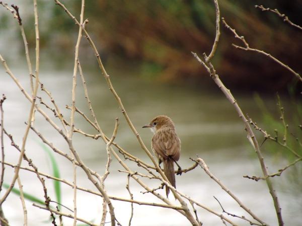 پرنده ای خیره به کارون