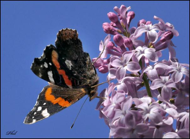 papillon insectes biodiversitè