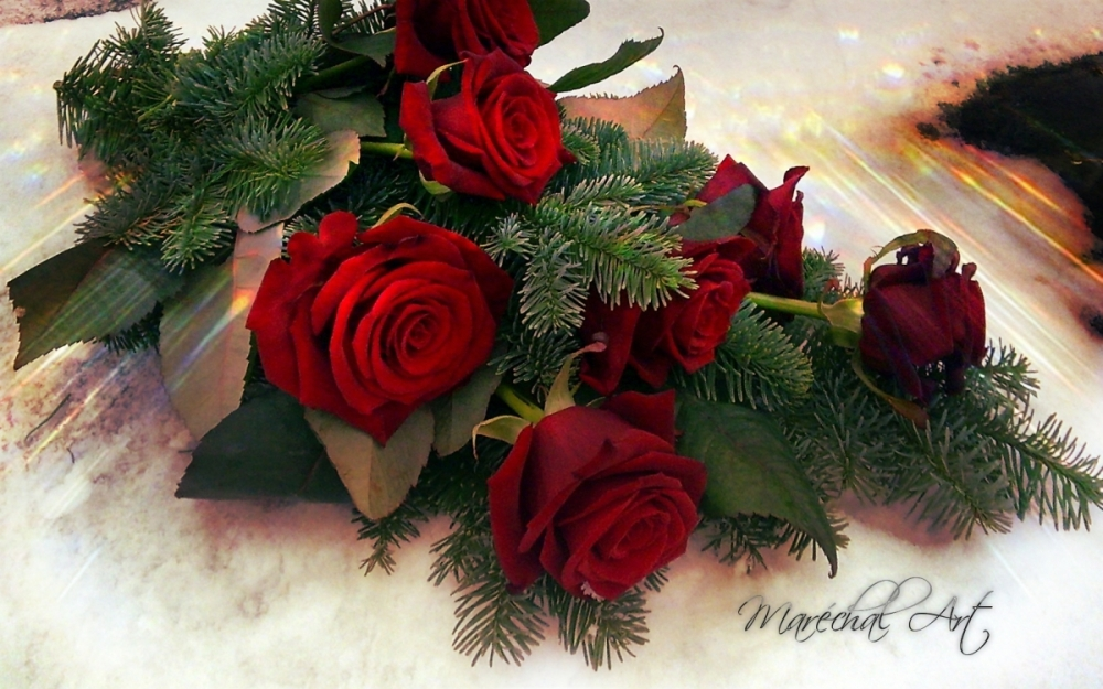 Rer roses and white snow