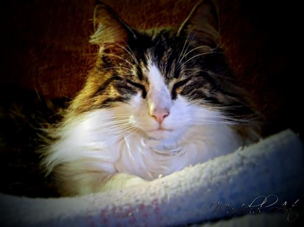 Tomcat Portrait