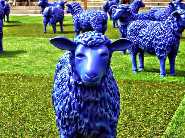 Blue Sheep in Germany