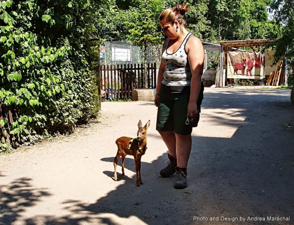 Bottle-fed fawn with its keeper