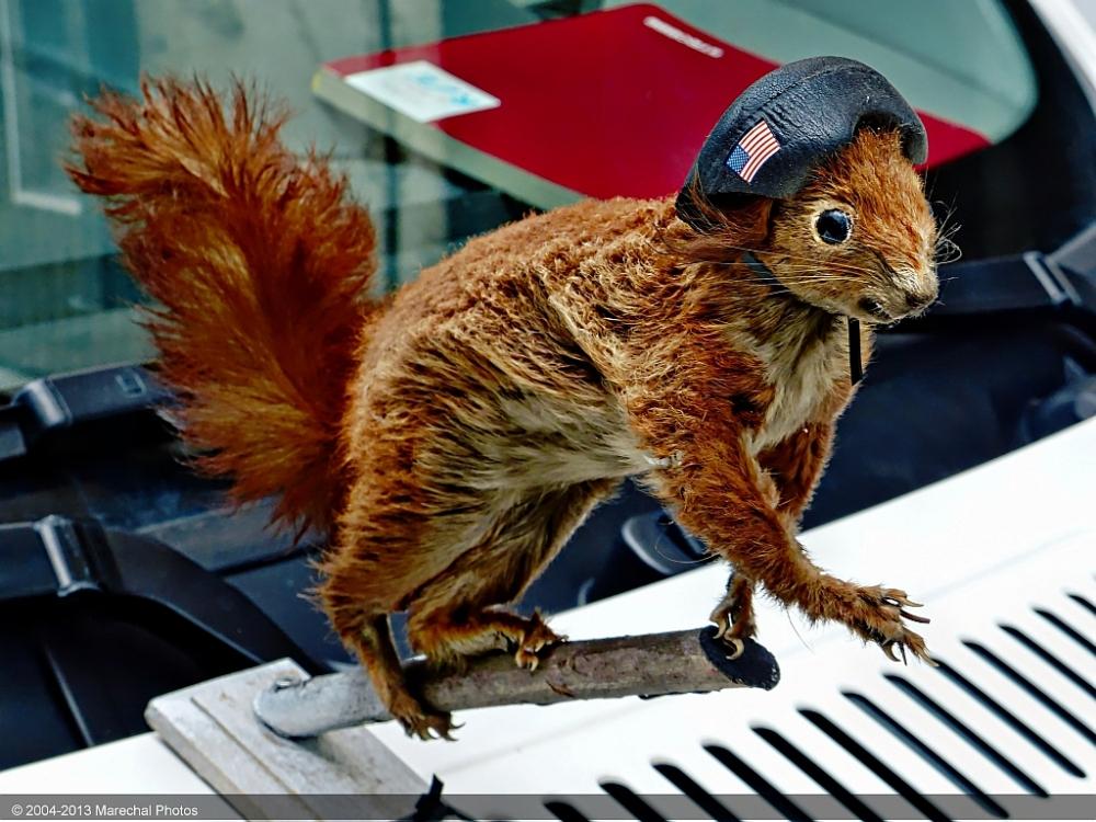 Squirrel as hood ornament