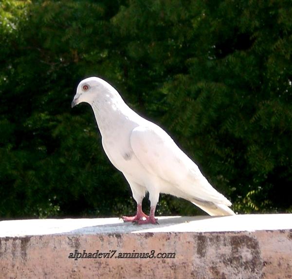 Bird Walk on the Ramp :-))))