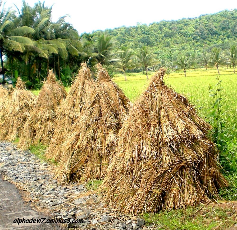 Heaps of Hay