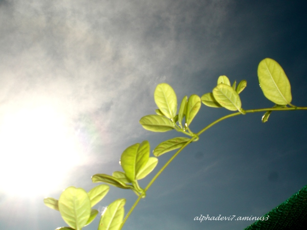Sun bathing:)