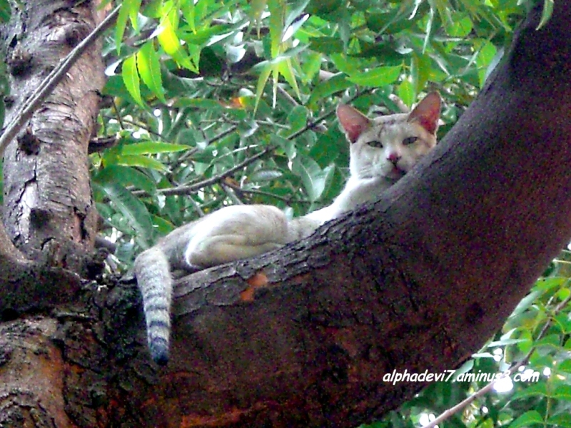 Cat on a cool tree top;)