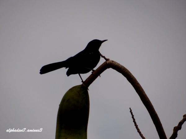 Good Night bird  / 1