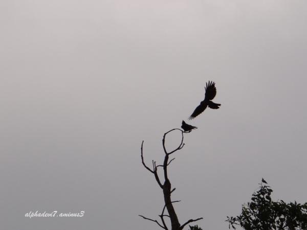 Black Birds 2