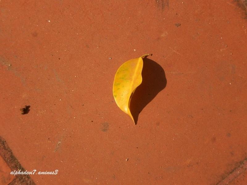 Shadow 8