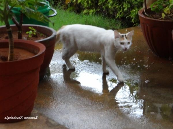 the wet cat