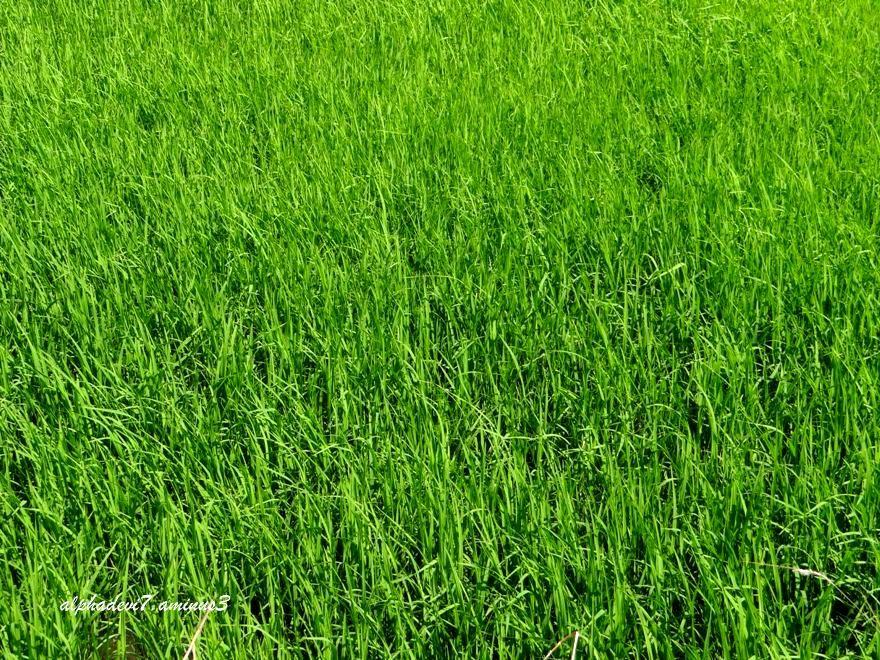 Green   green  green...