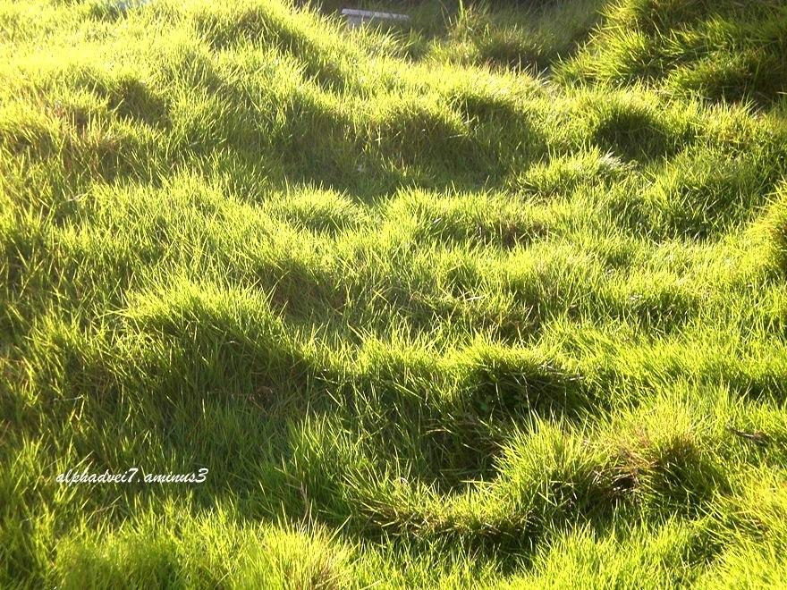 a lawn in a hotel