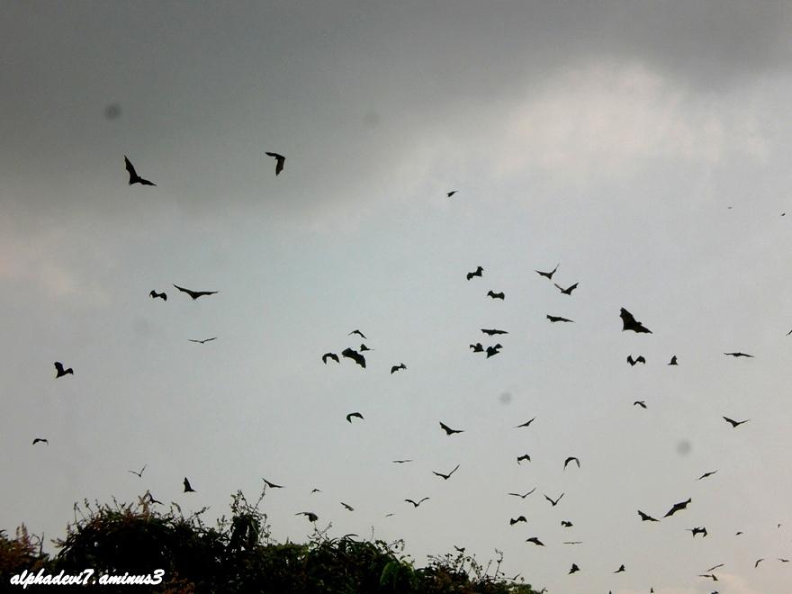 Bats and kites