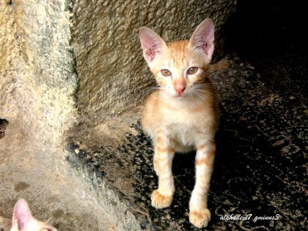 kittens 5