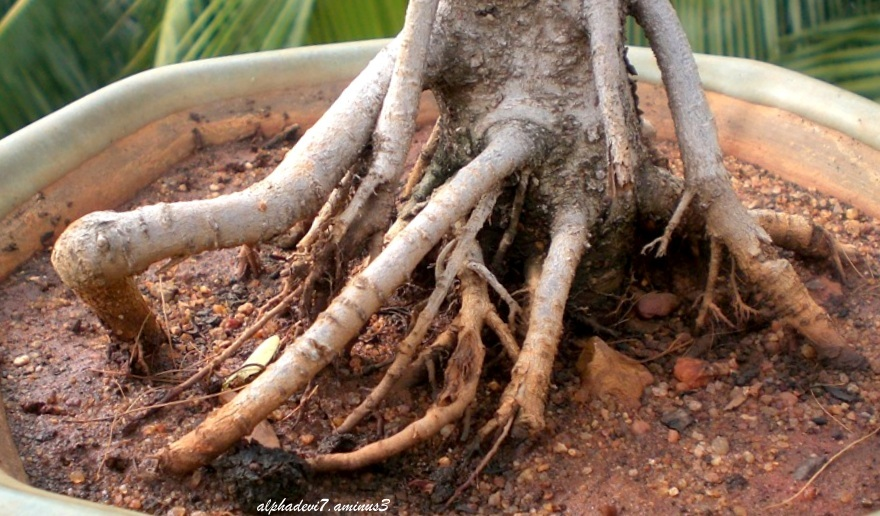 Rooted to the ground  4