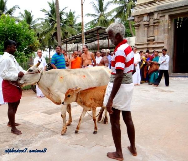 The Temple festival  1