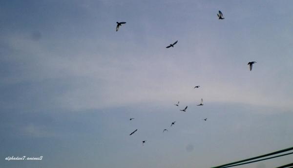 soaring....