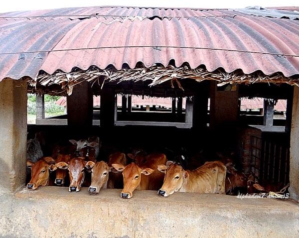Cows & Bulls  4