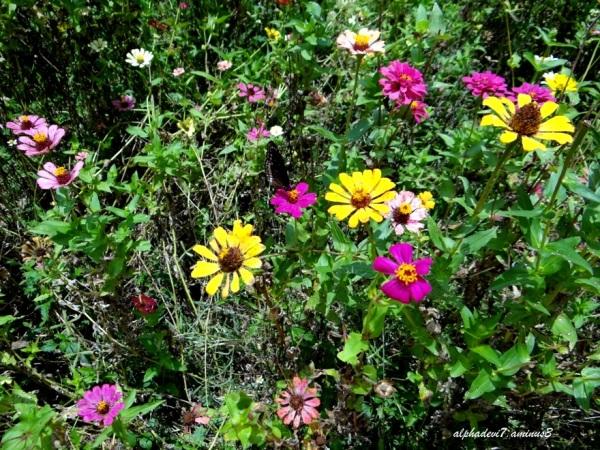 Flowers....