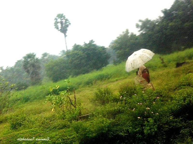 The white umbrella...