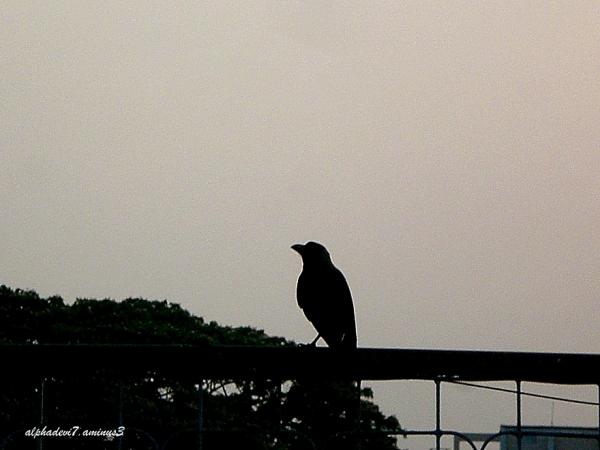 Impressive birds