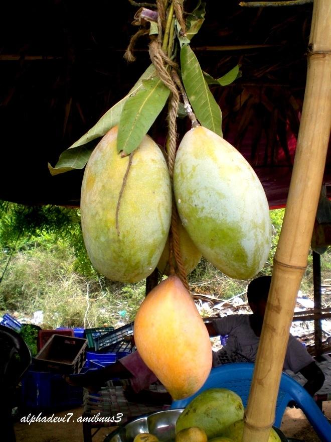hree delicious mangoes