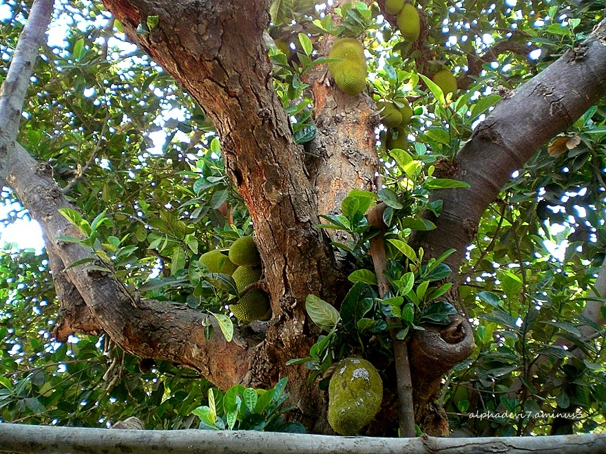 Teeming with fruits..