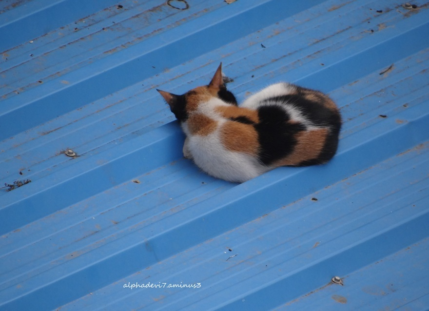 Cat on a cold Roof
